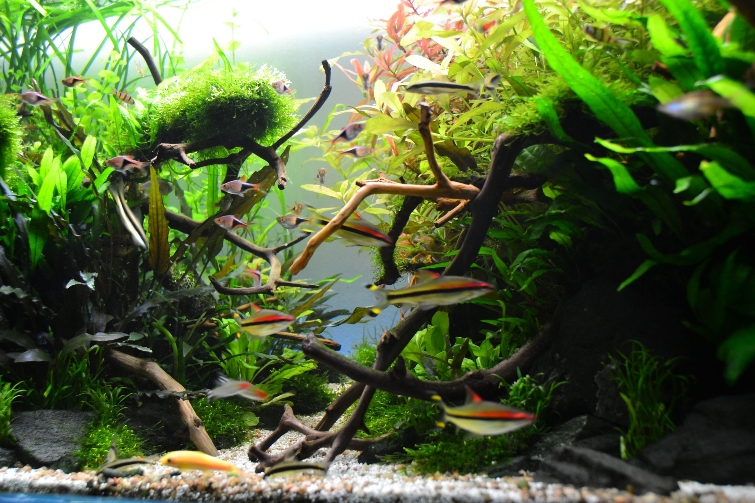 Why Are People Using The Aquarium Plants?